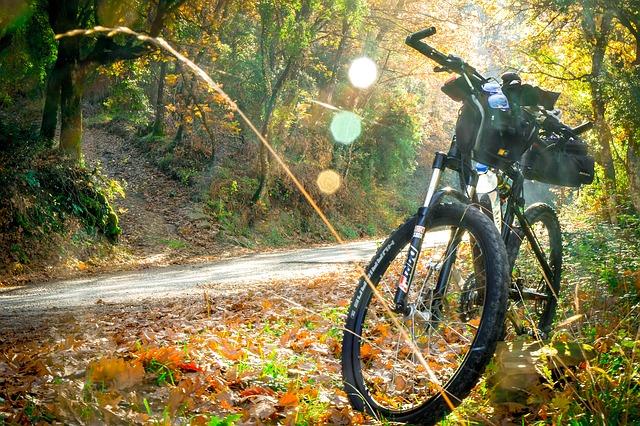 kolo v lese