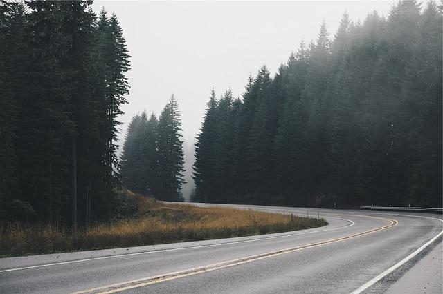 silnice mezi stromy.jpg